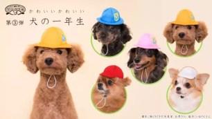 """家中愛犬變身「小學1年級生」?奇譚俱樂部""""狗狗的佩戴物""""系列♪ 多彩通學帽&紅白帽"""