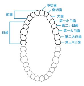 2号 3歯以上に対し歯科補綴を加えたもの