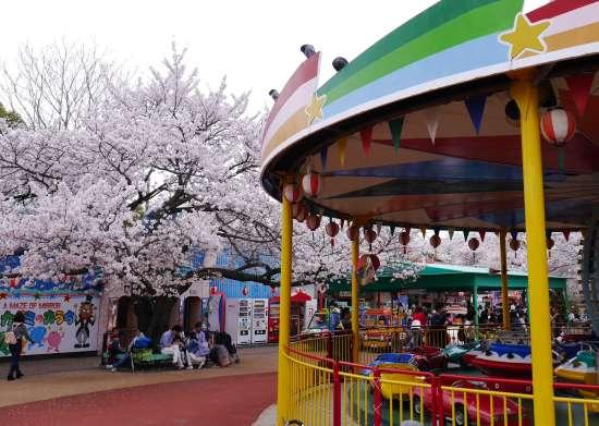 王子動物園 遊園地の桜