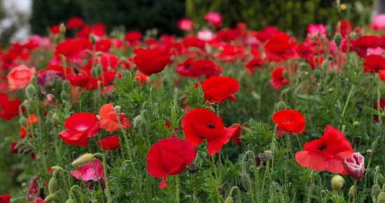 イングランドの丘 花