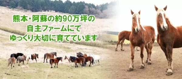 菅乃屋 千興ファーム 牧場