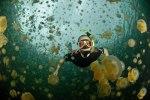 Ongeim'l Tketau - озеро, полное медуз