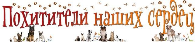 Заголовок книжной выставки о домашних животных