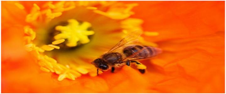 Козметични рецепти с пчелен прашец