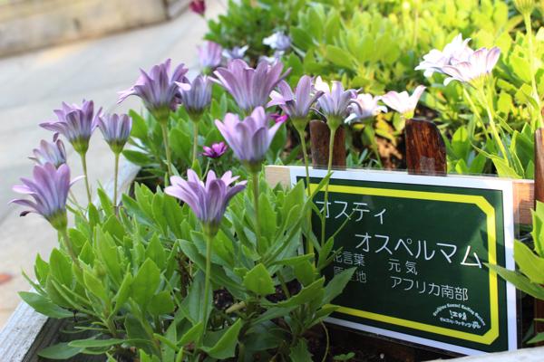 Enoshima 6