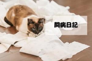 看病するネコ
