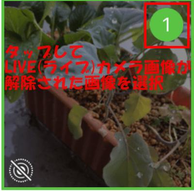 LIVE(ライブ)カメラ画像を解除した画像を選択
