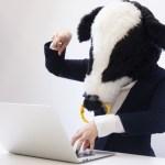 PC操作する牛