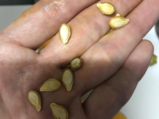 バターナッツの種