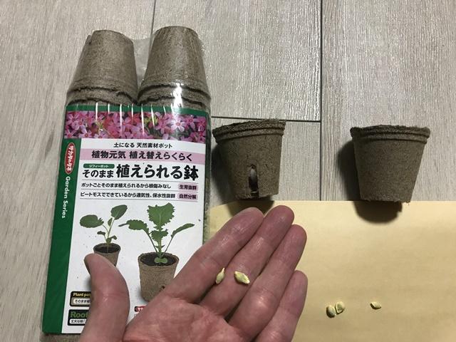 金柑の種とジフィーポット