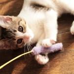 猫,異物,食べる