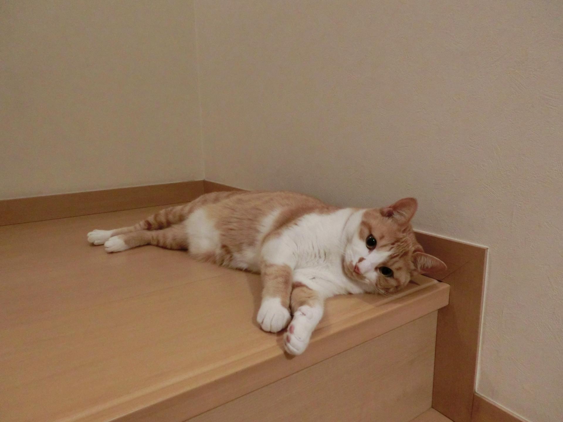 猫,喘息,対処法,症状,原因