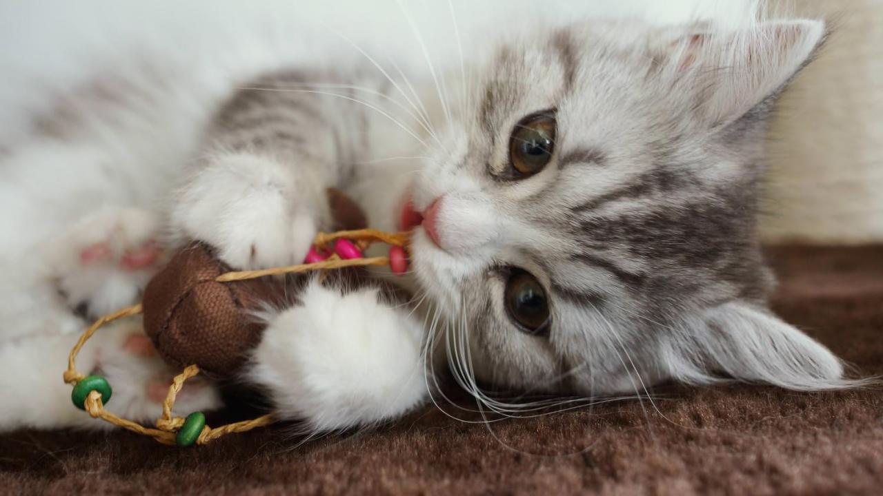 猫,爪,出血,手当