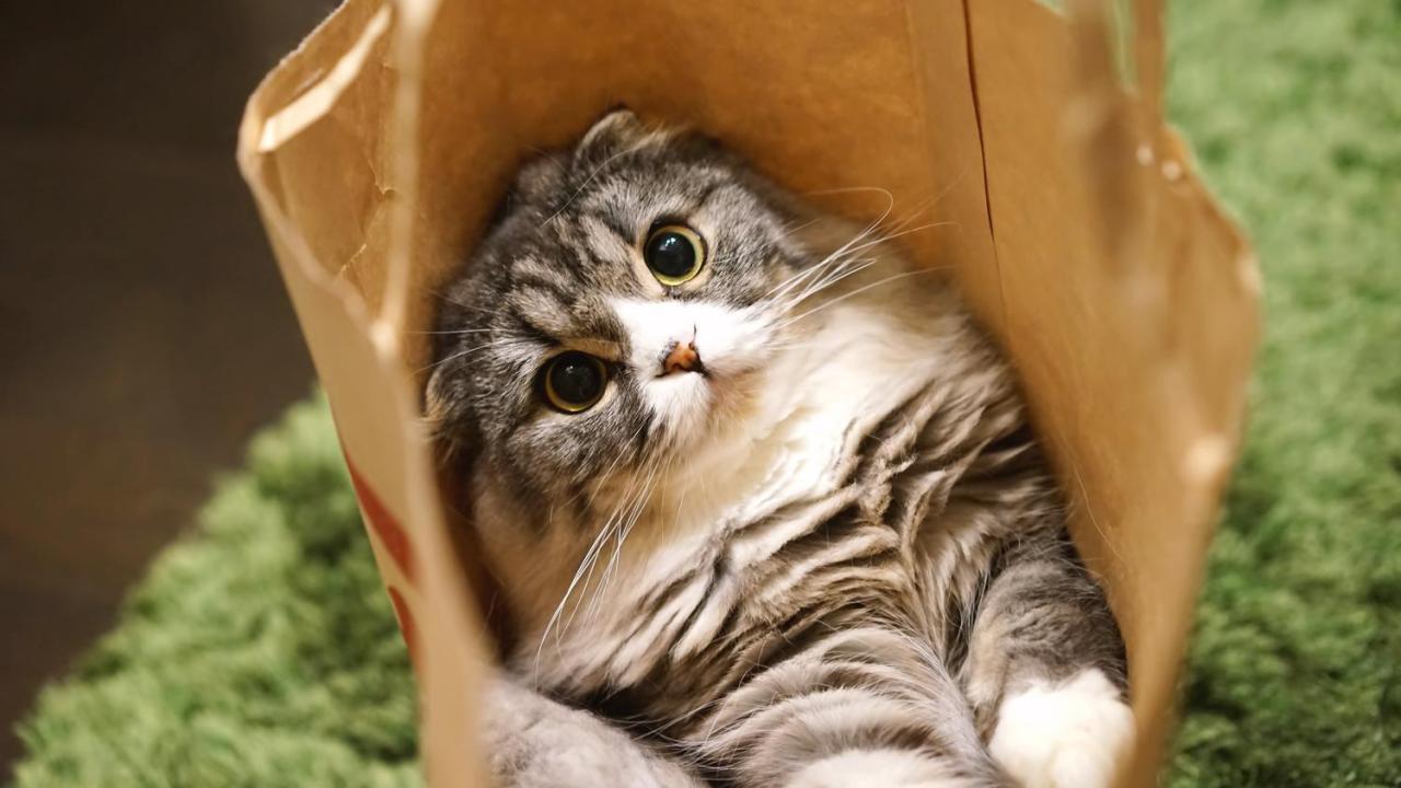 猫,足,骨折,症状