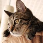 猫,怪我,オロナイン