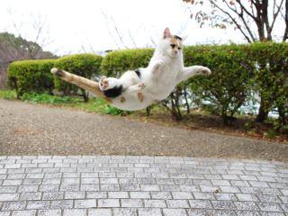 猫,ベランダ,落下,怪我