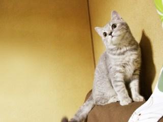 猫,怪我,感染症