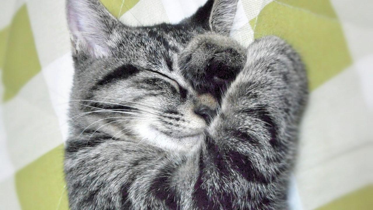 猫,痙攣,顔,ピクピク