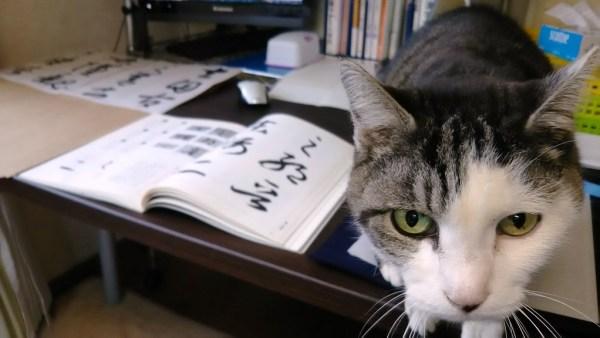 老猫 「偉そうな事を言う前にお前は稽古しろ~」