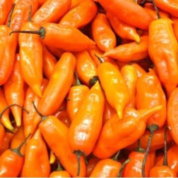 Aji Amarillo peruvian chili 1