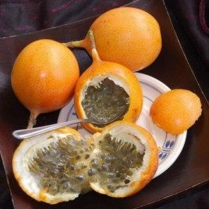 Granadilla Passiflora ligularis 4