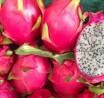 pitahaya pitaya Hylocereus undatus 2