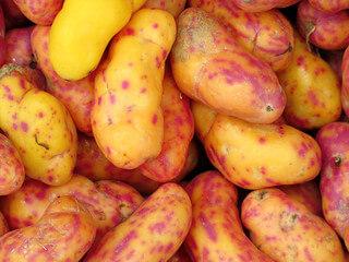 olluco or melloco 2