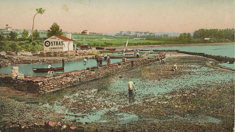 Parque de ostras Carnicero