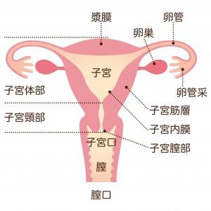 麻美ゆま子宮がん