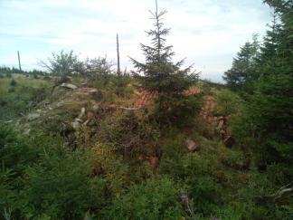 Überreste der Juranek Hütte