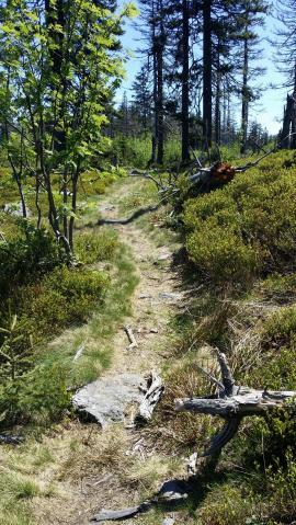 Singletrail zum Jezerní hora