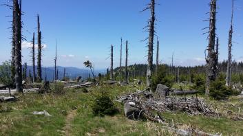 Der Pfad kaum erkennbar zum Jezerní hora