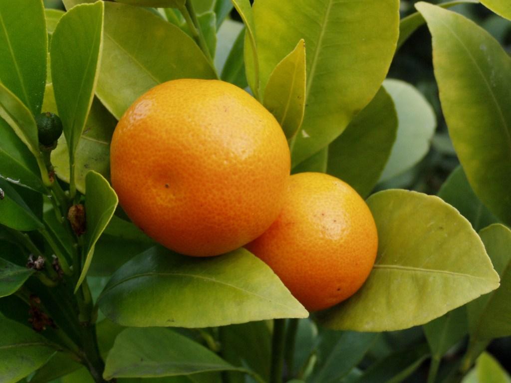 Überwinterungsservice - Orangen
