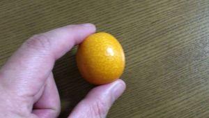 玉が大きい金柑たまたま