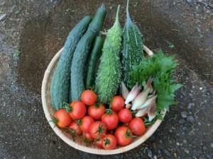 みょうがは夏野菜