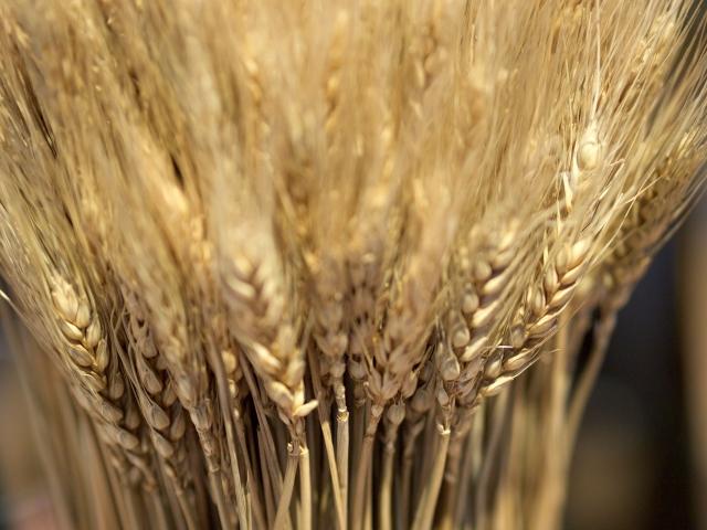小麦粉の保存方法