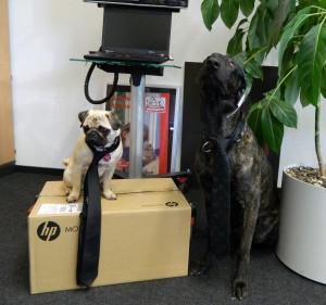 Bundesverband Bürohund eV - (C) Fressnapf- T-Stevens - Checkers-Schroeder