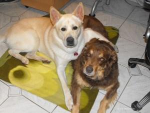 Bürohunde Balin und Pepper. Fotoquelle D. Neureiter.