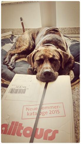 Kenny (C) P. Timte, Quelle: Bundesverband Bürohund