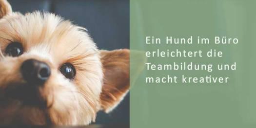 Ein Bürohund vereinfacht die Teambildung