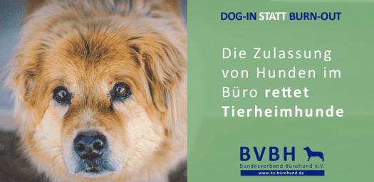 bürohund-tierheimhunde