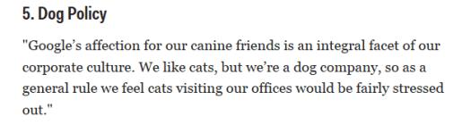 dog-policy-google