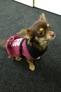 Bürohund pets Premium: Randy Bürohund bei pets Premium