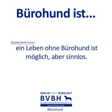 B-Hund_ist_Furrer