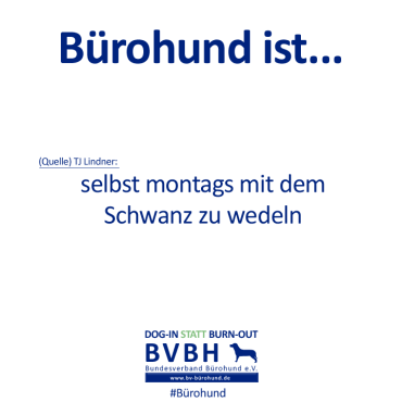 B-Hund_ist_Lindner
