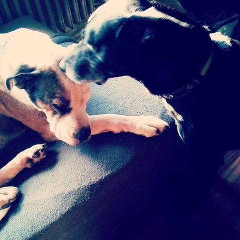 Welthundetag 2016 - Bürohund Linda & Fenris