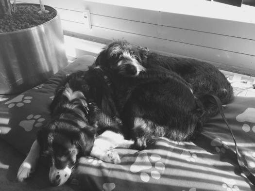 Welthundetag 2016 - Bürohund Ayla und Ipa