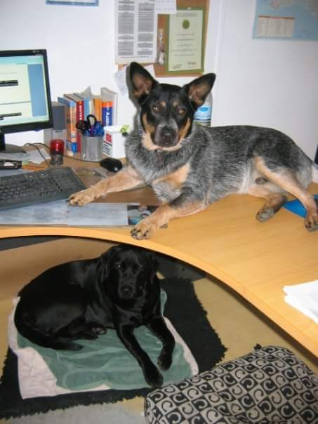 Welthundetag 2016 - Bürohund Kelly und Paul