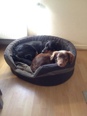 Welthundetag 2016 - Bürohund Celli und Amelie