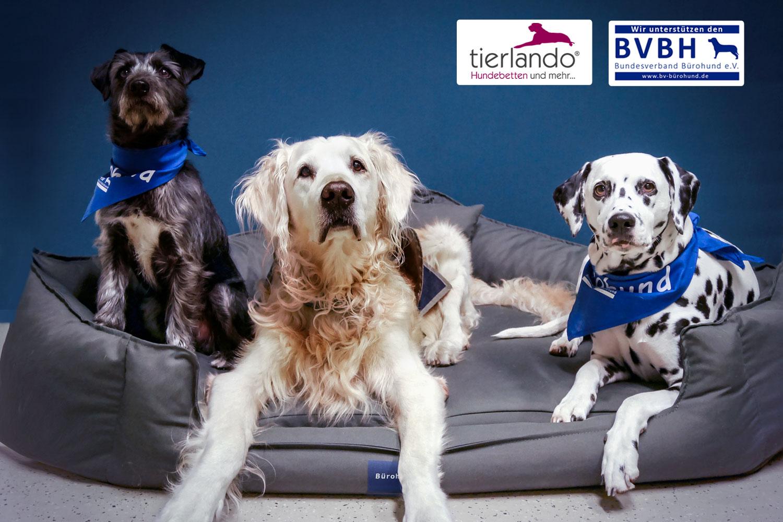 Bürohund-tierlando-Hundebett-Office-Ortho-Serie